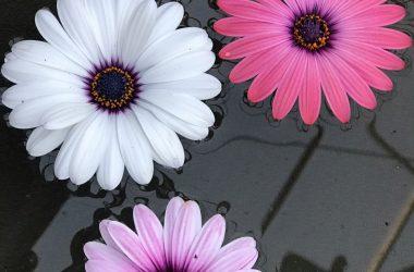 Blomster i vandfad