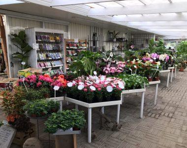 Butikken stueplanter