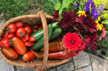 grønsager i kurv