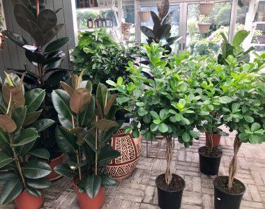 store stueplanter